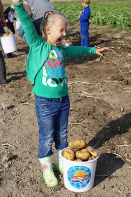 Foto Week van de Friet Aardappelen Rooien